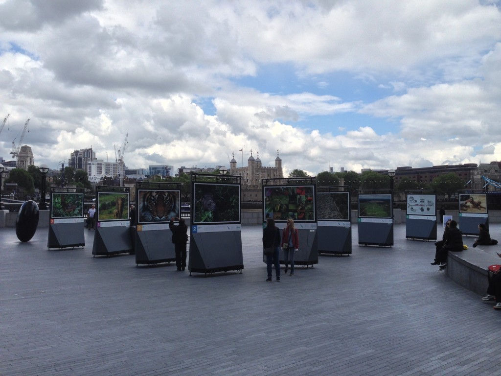 Wide shot showing most of the frames, plus the tower of London